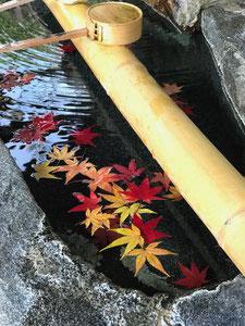 加佐登神社:紅葉