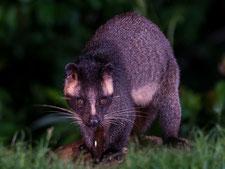 獣類対策 ハクビシン モグラの防除