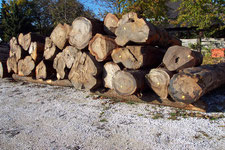Roundlogs, Logs, hardwood, domestic and exotic wood, warehouse