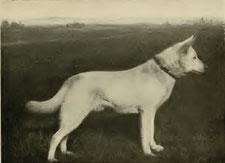 Berno von der Seewiese