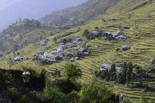 kyanjin gompa - trekking langtang highlands - hauts plateaux langtang