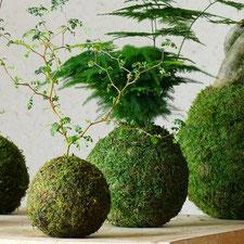 kokedama, art japonais, boule vegetale, boule végétale, pot végétal, pot naturel, pot à fleur mousse, pot mousse, pot vert, pot à fleur vert, pot à fleur permaculture, pot à fleur japonais, pot japonais, pot bonsaï, bonzai, bonsaii, decoration végétale