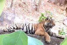 Rundreise Indien mit Safari 13 Tage