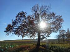 arbre énergie