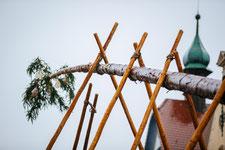 Der Narrenbaum wird gesetzt
