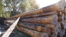 Bauholz, Bauschnittholz, Rundholz gestapelt