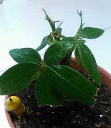 絵本塾の療養中の植物の画像