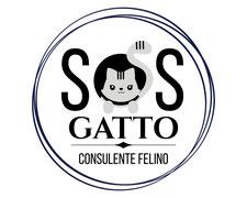 Risolvi i Problemi con il tuo Gatto! Consulenza Personalizzata in tutta Italia.