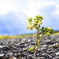 Eine winzige Pflanze wächst aus einer Ritze im Asphalt