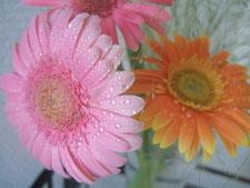 鍼灸治療室内に飾った花の写真。ガーベラ。