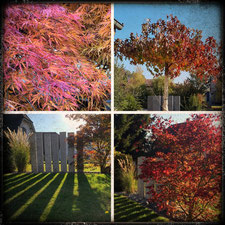 Bild; Herbstfärbung