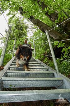 Mit Hund am Berg; Gitterrosttreppe