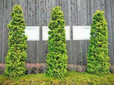緑化の工事写真