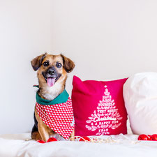 hundsoadli Weihnachtshundehalstuch