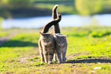 Tierkommunikation, Tiergespräche