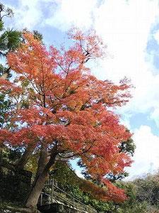 小春日和での紅葉は素晴らしいです(^^♪  気持ち良い、大きく深呼吸ふーーー