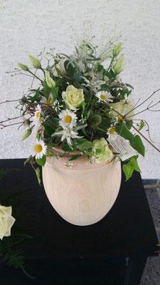 Topf- und Grünpflanzen