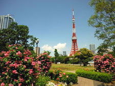 Tokyo Tower and its surroundings