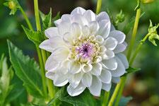 Achtsam bleiben in der Blüte des Lebens - Workshop - Achtsamkeit - Neuss - achtsammitdir