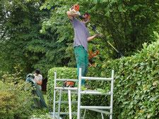 Service horticole - Entreprise de parcs et jardins Laurent Toussaint - Virton - Saint-Mard