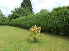 Plantations et haies - Entreprise de parcs et jardins Laurent Toussaint - Virton - Saint-Mard