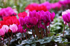 冬の花(11~1月頃の花)