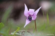 早春の花(2~3月頃)