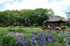 城北菖蒲園(ハナショウブの名所/別ページに移動します)