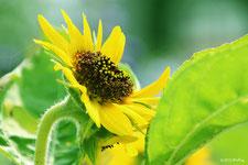 夏の花(6~8月頃)