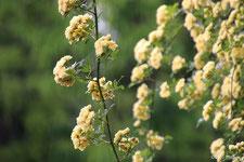 春の花(4~5月頃)