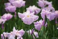 初夏の花(5~6月頃)