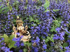 Rituale - Praxis für Naturheilkunde und Tibetische Medizin Baden