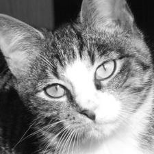 Tierheim Lindern Katzen Vermittlung