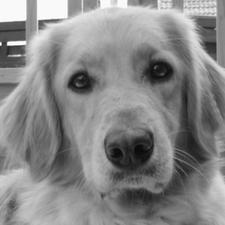 Tierheim Lindern Hunde Vermittlung