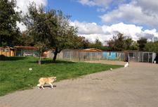 Tierheim Lindern Blick auf die Außenzwinger für Hunde