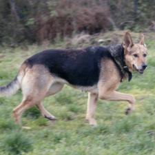 Maria - unser Hofhund im Tierheim Lindern