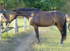 Felix in Bestform Gesundheit für Pferde Hof Felix