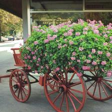 Blumenwagen vor dem Blumenladen