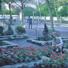 Blumenladen in der Wollhausstraße