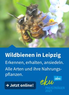 Der Moorfrosch ist wie viele andere gefährdete Tierarten in den Papitzer Lachen zu Hause. Foto: NABU/Klemens Karkow
