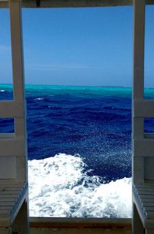 Scuba diving in the Maldives with Liquid Salt Divers, Dharavandhoo, Maldives. Dante Harker