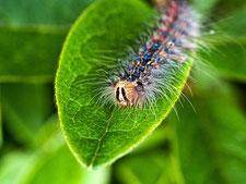 ケムシ 消毒 駆除 害虫 庭木 植木