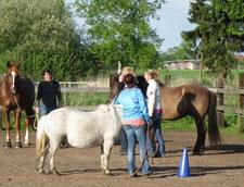 Natural Horsemanship und Freiarbeit Kursvorschläge