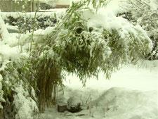 Bambus im Schnee