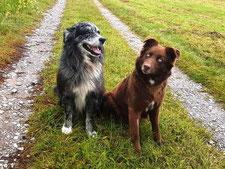 Hazel & Spotty