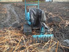 昨年の収穫(掘り取り)状況