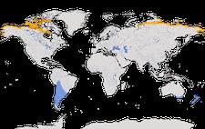 Karte zur Verbreitung des Graubruststrandläufers (Calidris melanotos).