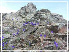 Saat, Gipfelkreuz, Blumen, Maiglöckchen