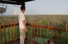 View from tower in the bush