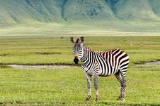 2 days safari Lake Manyara and Ngorongoro Crater